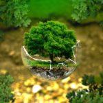 Qu'est-ce qu'une écologie intégrale?